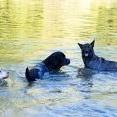 dogsSocialisingLarge