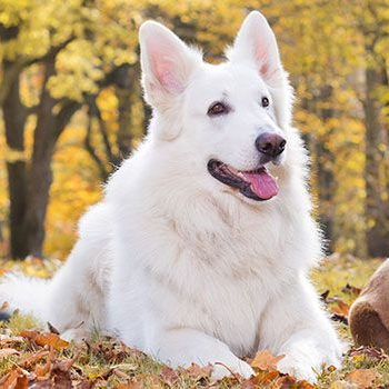 header-dogs-outdoors