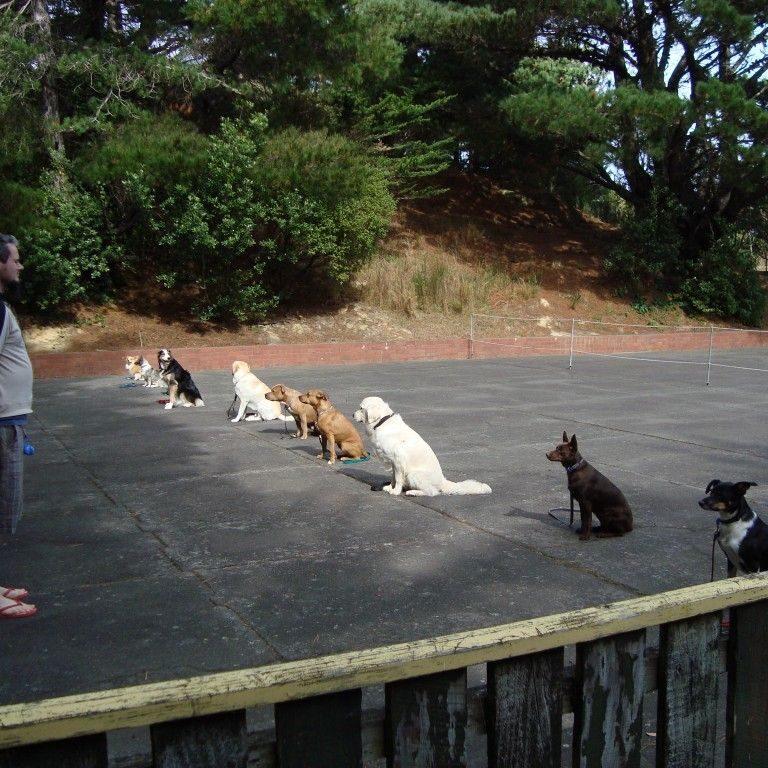 Wellington Canine Obedience Club - Training