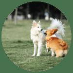 dogSocialising2