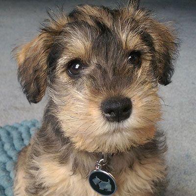 puppy-piper
