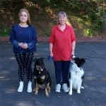 Wellington Canine Obedience Club - Training